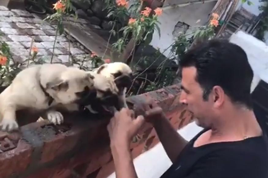 Akshay Kumar's Workout Session With Pugs Looks Like a Stress Buster